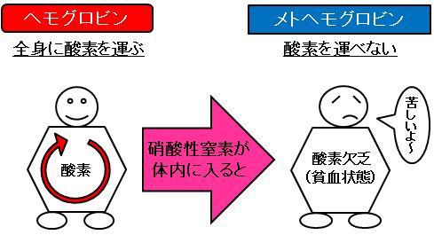 ヘモグロビン横幅調整B.jpg